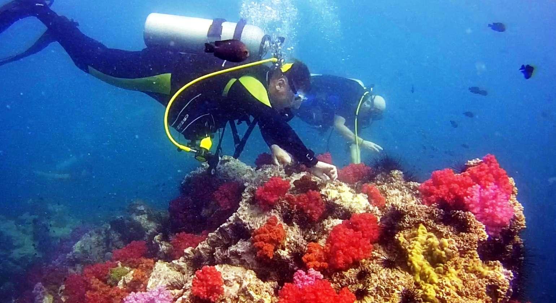 Коралловый мир Пхукета