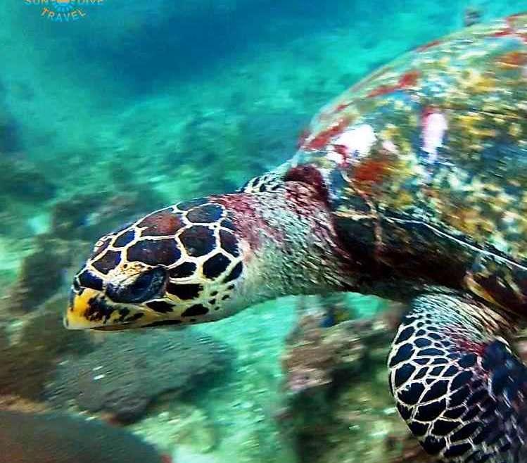 Чем питаются черепахи.