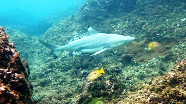 Рифовые акулы на Пхи-Пхи