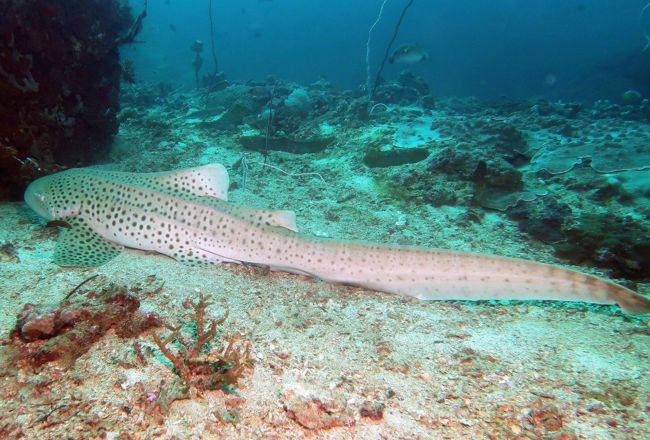 Акулье местечко Shark Point